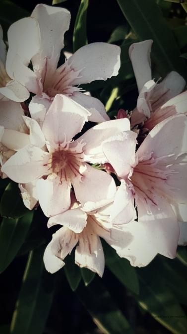 flower2 c