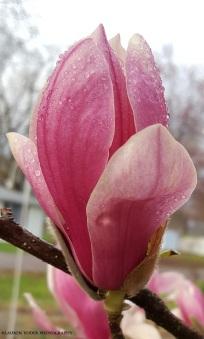 flower3 c
