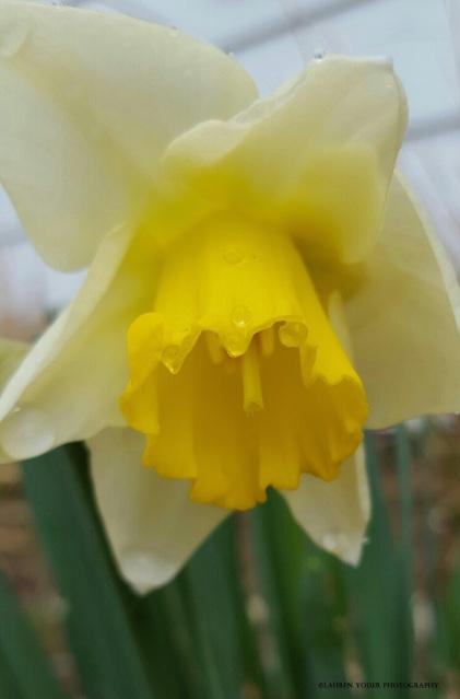 flower6 c